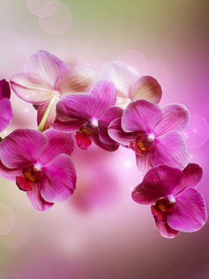Wallpaper Orchidea